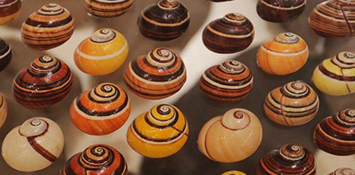 bangkok-seashell-museum-2